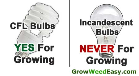 Growing Weed With Cfls What Growers Need To Know
