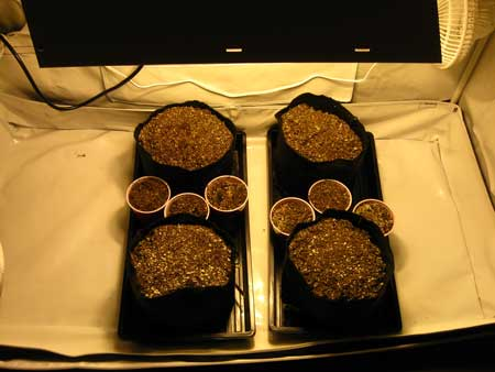 Coco coir in containers - ready for planting your cannabis seeds!