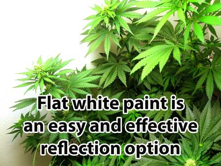 Flat white paint is an easy and effective reflection option for your cannabis grow room walls