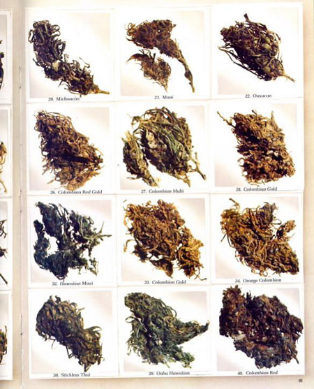 "Some of the top cannabis strains from ""High Times"" magazine circa 1977"