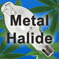 Metal Halide - MH for the vegetative stage of marijuana growth