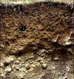 Natural layers of soil in the environment