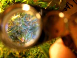 Take a picture of your plants through a Jeweler's Loupe or other magnifier