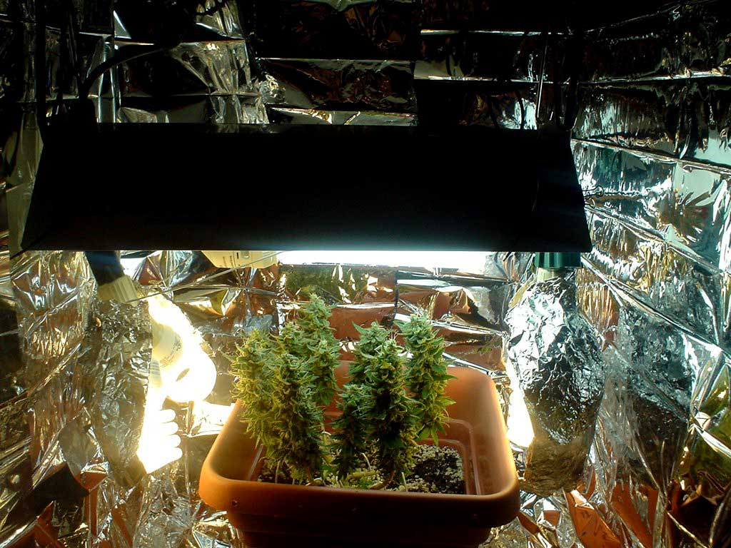 Side Light Setup Grow Room